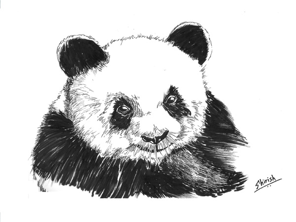 Drawing Animals with Pen and Inks