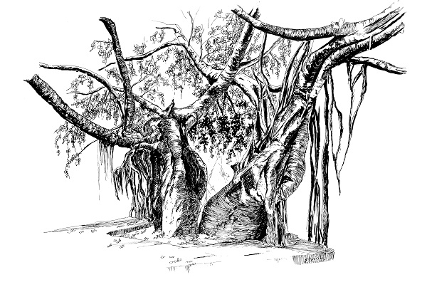 Draw a Twin Tree using Technical Pens